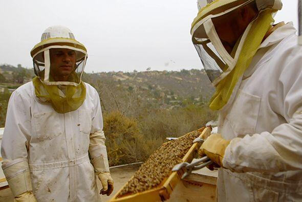 En el colmenar de Scott Tenney, el doctor Juan encontró abejas africaniz...