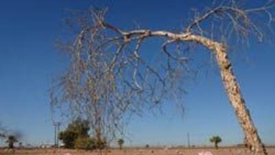 Cuatro formas de ser ecológicos aún después de muertos 8686aacf84ef4436a...