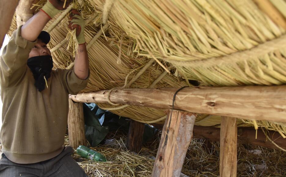 Este forraje ha sido tradicionalmente utilizado por los pescadores del A...