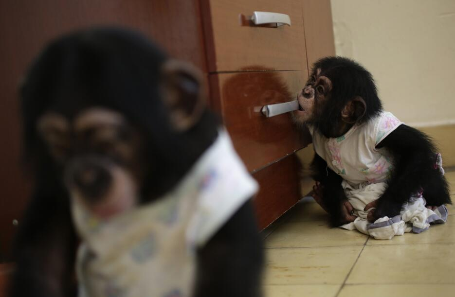 Monkey business in Havana 18.jpg