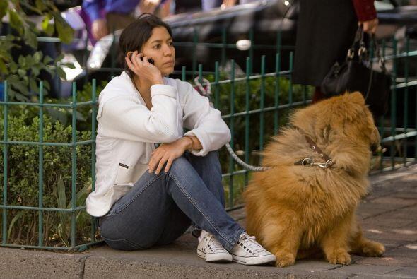 Una solución para combatir la sobrepoblación canina y felina sería la es...