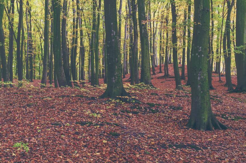 Cuando la mejor terapia es un paseo entre los árboles  michal-parzuchows...