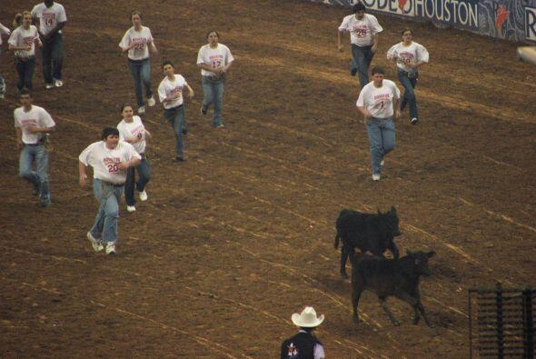 Una de las actividades más divertidas es el 'calf scramble'.