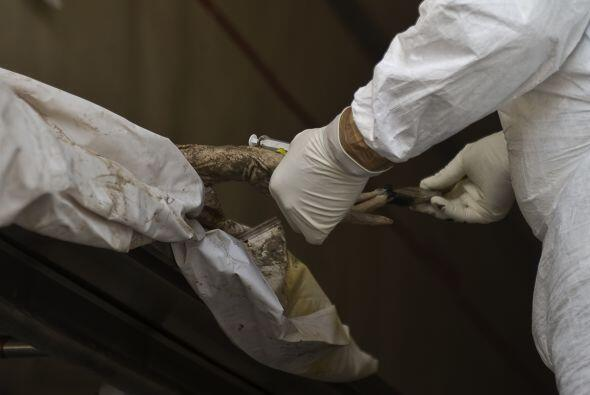Los últimos cuerpos fueron encontrados en cinco tumbas clandestin...