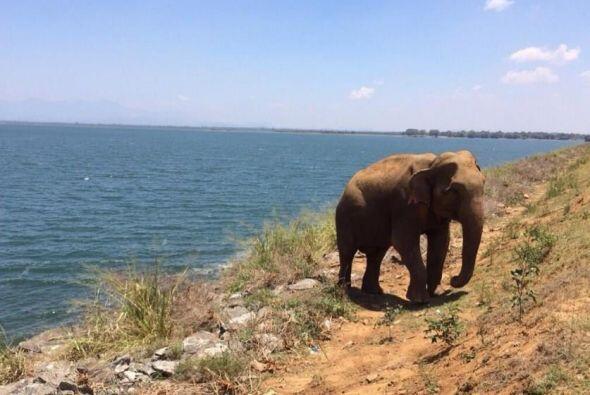 ¡Wow! Un elefante se cruzó en su camino.