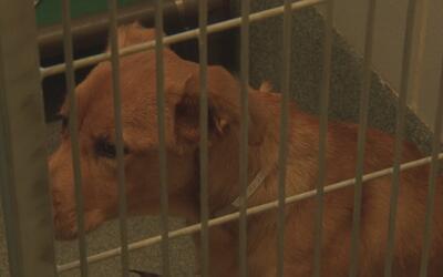 El refugio de animales de Sugar Land ofrece mascotas en adopción con tar...
