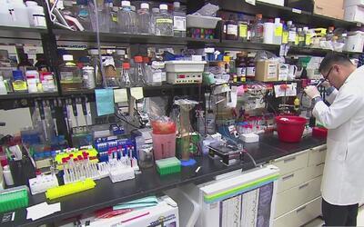 La larga lucha de la medicina por encontrar la cura contra el cáncer