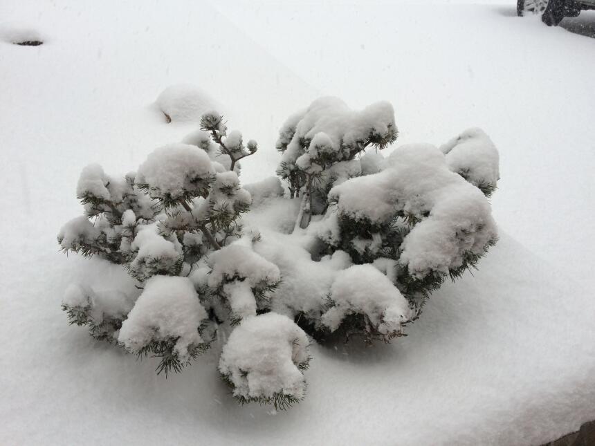 ¡Tremenda nevada en el norte de Arizona!