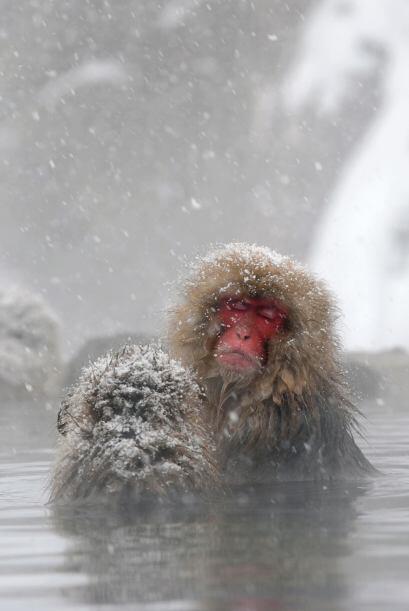 La inteligencia de este otro animal viene desde el frío de Jap&oa...