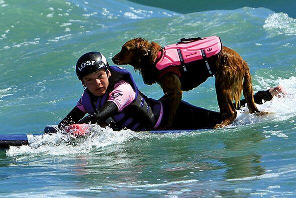 Este perro es la mejor compañía para surfear y para curar algunos padeci...