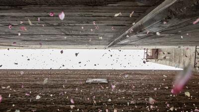 Pétalos de flores caen en un callejón de Los Ángeles