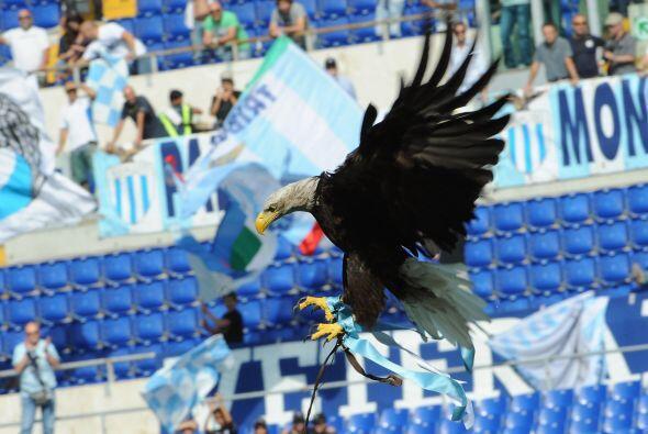 Es la mascota de la Lazio, que ni con estos espectáculos llena su estadi...