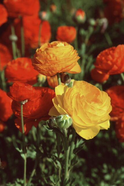 Flores encantadoras para una boda de invierno