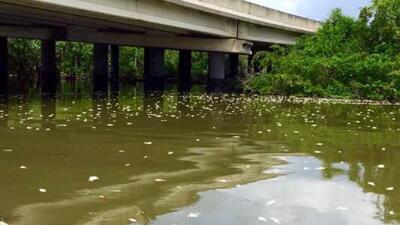 Mortandad de peces en laguna San José