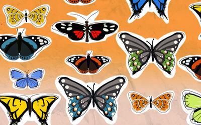 ¿Sabías que las mariposas reflejan el estado de salud de los ecosistemas?